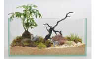 自分で作る癒しの空間!苔のジオラマ「苔ラマ」!