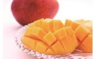 【数量限定】大人気の「鉢植えマンゴー」受付中!