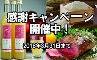 寄附者様への感謝キャンペーン開催中!