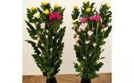 菊を中心とした季節の仏花
