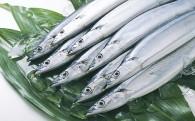 【受付開始】「サンマ鮮魚便(10尾)」