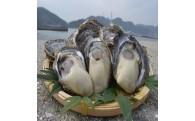 【特大!】相生産岩牡蠣【プルプル♪】