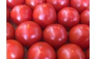 新鮮トマト!まずは生でお召し上がりください!