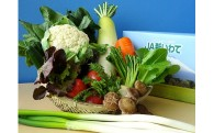 久慈市の季節の野菜詰合せ(おまかせセット)