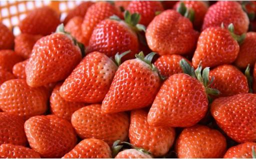 3月末まで! 『山本農園』のイチゴ「ゆうべに」