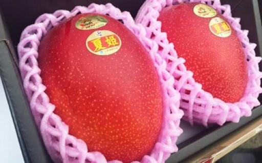 【鹿児島ブランド】大崎町産マンゴー「夏姫」