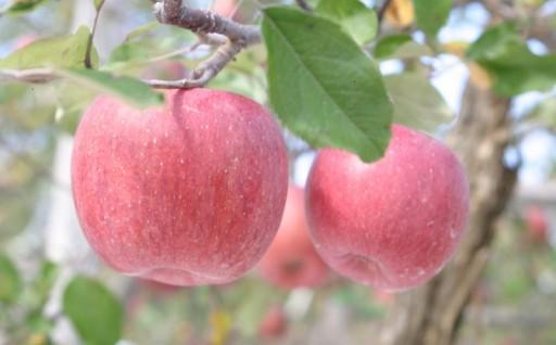 あなたもりんごの木オーナーになろう!