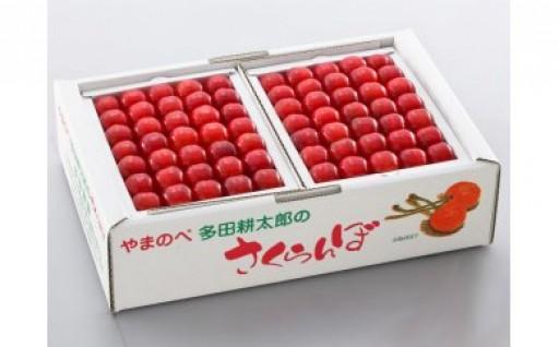 初夏の贈り物!さくらんぼ佐藤錦手詰1kg