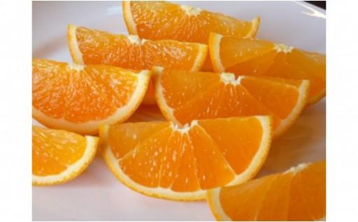 みかん×オレンジ=「清見オレンジ!」