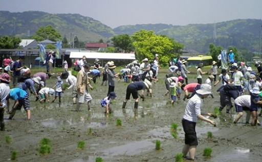 自分の手で田植え&稲刈り!農業体験「米づくり」