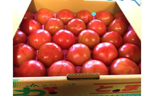 【期間限定】新鮮トマト受付開始!