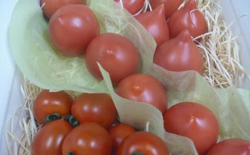 室戸産の旬トマトを3種類お届けします!