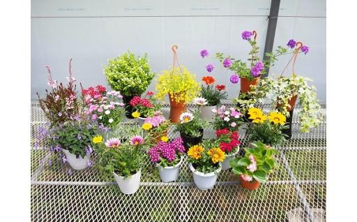 【季節の鉢植えお楽しみセット】受付再開です!