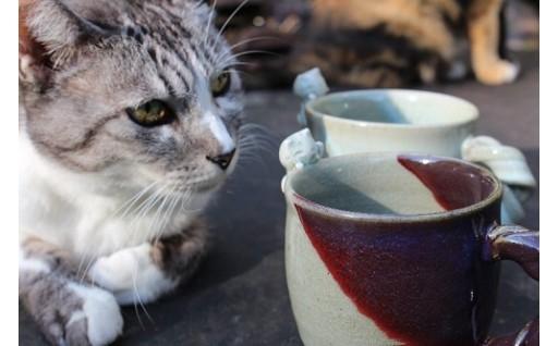 猫好きの窯元が作る、猫好きのためのマグカップ