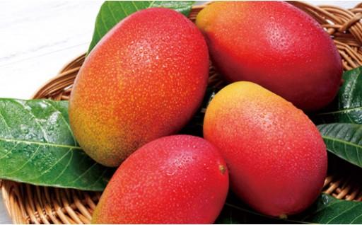 佐世保の夏のフルーツ マンゴー こだわりの育て方