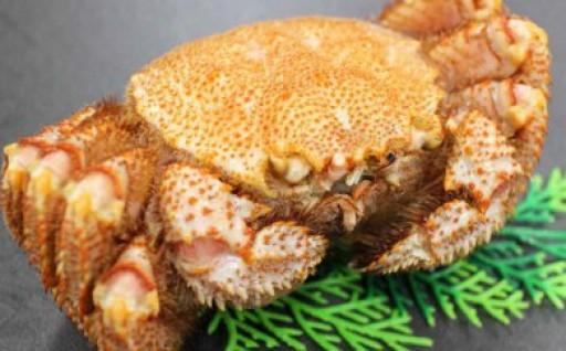 【春の毛蟹】常呂沖産ボイル毛蟹(冷凍)600g