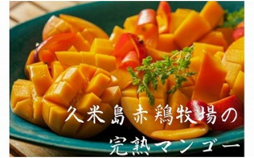 久米島赤鶏牧場の完熟マンゴー2kg(4~6玉)