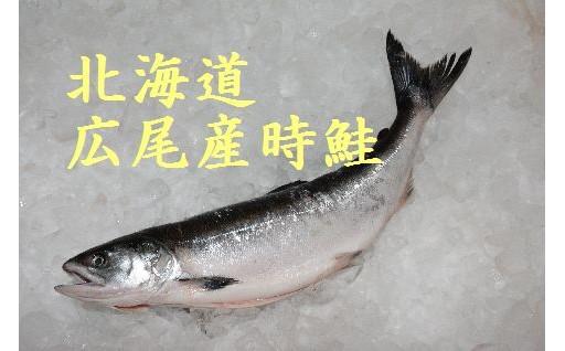 今が旬の北海道広尾産「時鮭」