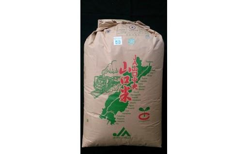 鳴滝清流米玄米60kg
