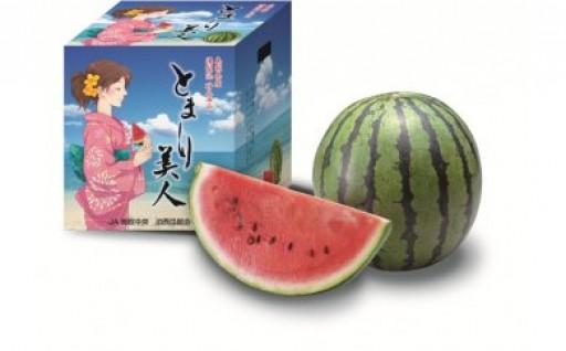 残りわずか!! 鳥取県産すいか『とまり美人西瓜』
