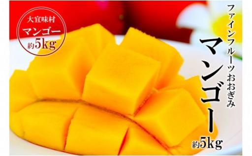 農園直送ファインフルーツおおぎみマンゴー約5kg