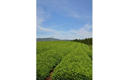 【6月限定】緑茶発祥の地の新茶をお届け