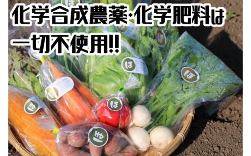 農薬など不使用の「ほんまもん野菜」セット!