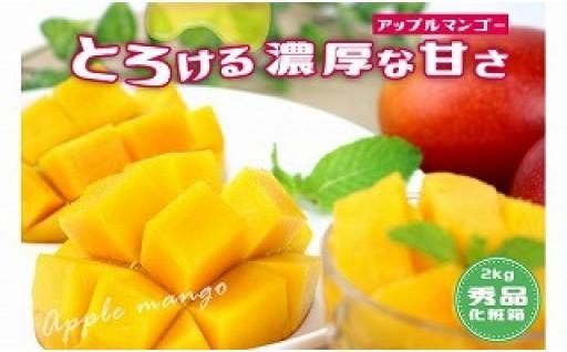 沖縄県産マンゴー 4玉~6玉(約2kg)