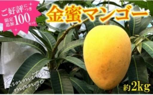東村産(クガニ)金蜜マンゴー