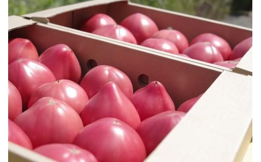 6/30まで受付!訳ありトマト大容量にてお届け。
