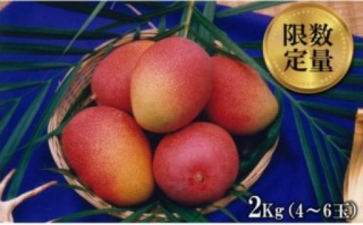 東村特産マンゴー園の完熟マンゴー 約2kg