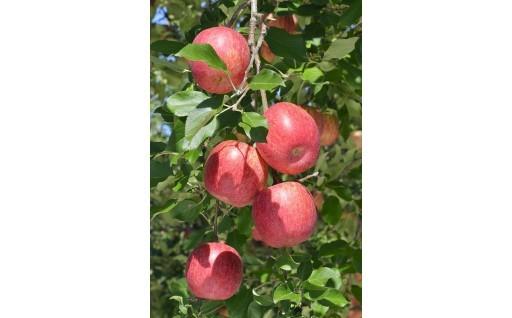 天下一品!志賀高原が育む「りんご」