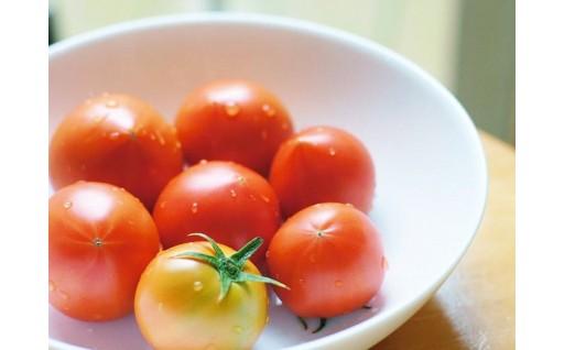 フルーツトマトはお早めに!