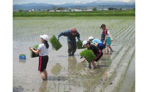 秩父別町の新米★子どもたちが田植えをしました!