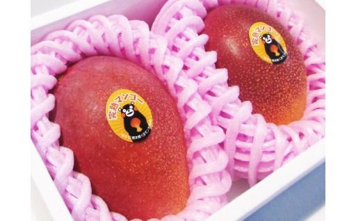 【人気の品】自然落下を待つ100%完熟マンゴー!