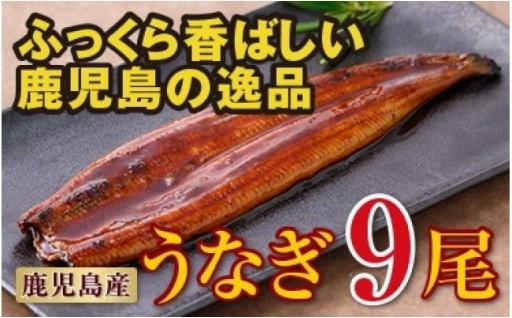 土用の丑の日に鹿児島県大隅産特上うなぎを!