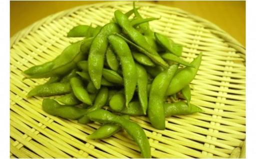 産地直送 朝採り枝豆