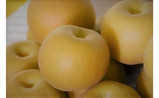 これからが旬!境町産 梨の受付開始しました。
