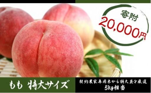 先行予約【桃 5㎏】契約農家!指定木の大玉限定品