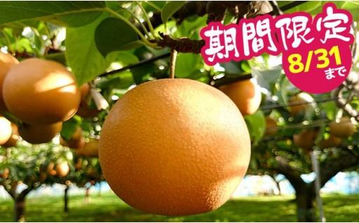 【数量限定】甘さと酸味の好バランス!豊水梨