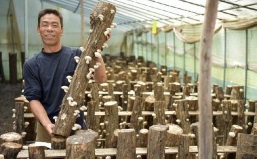 中辻政隆さんの原木しいたけ受付再開です!