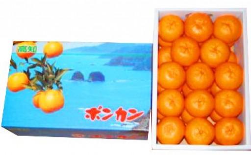 果物ランキング1位獲得のポンカンの早期予約開始!