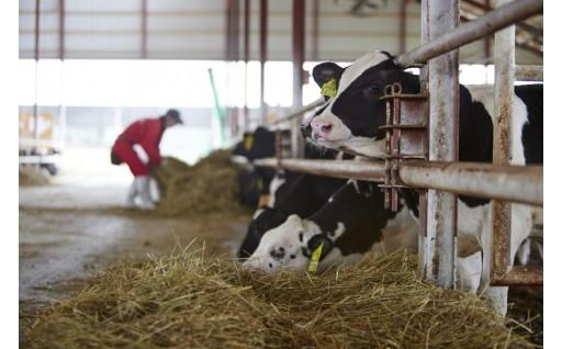 大野ファームの「みらい牛」