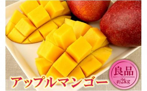 【良品】沖縄県産 南部共選マンゴー 約2kg