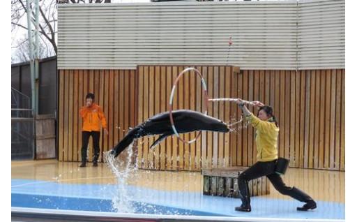夏休みに!東武動物公園ワンデーパスチケット