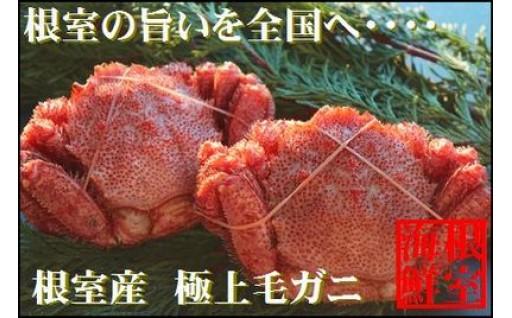 【北海道根室産】毛ガニ350~450g×2尾