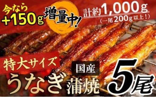 【増量キャンペーン残りわずか!!】うなぎ蒲焼5尾