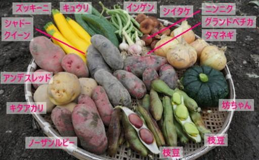 季節の野菜詰め合わせの発送開始