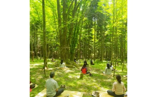 【お大師様の森林を体感する】高野山森林セラピー