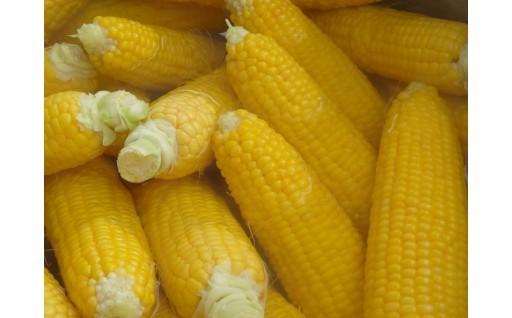 トウモロコシのお申し込みは7月末まで